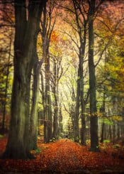 forest alley trees fall blur painterly leaves textures perspective romantic