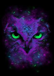 owl animal bird watcher unique neon illustration stars universe