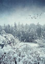 winter birds snow blue mood atmosphere trees haze texture white serenity picturesque view