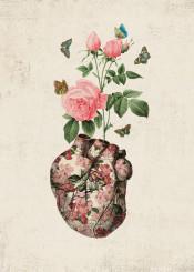 love rose butterfly heart valentine