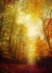 forest fall colors textures leaves atmosphere path romantic landscape trees lush
