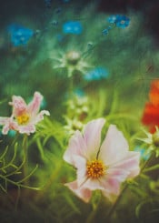 spring flowers painterly colors cosmea dof bokeh textures green blue red rose fresh