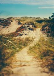 beach blue bright calm clouds cloudy coast coastal dunes footpath grain grass green holiday landscap