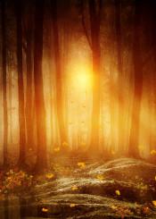 landscape nature love fineart forest sunset