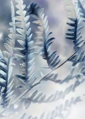 fern flora nature
