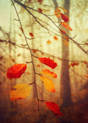 red yellow tree leaves atmosphere autumn fall colors bokeh close up twigs painterly textures nature
