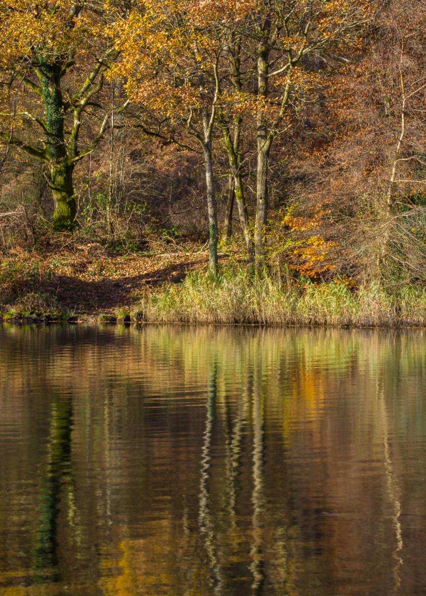 Golden Pond 69472