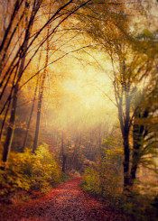 fall autumn vintage light path hike forest leaves romantic red yellow green blur texture haze