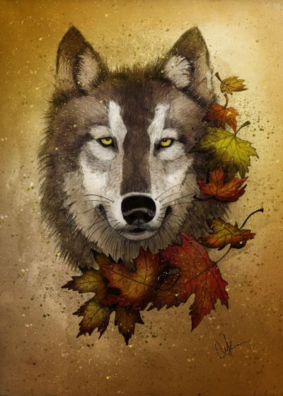 Marine Loup Animal Kingdom   Displate Prints on Steel
