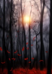 landscape nature red feathers love sunset fineart