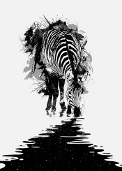 zebra stripes space stars graphic design