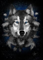 night wolf moonlight