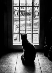 cat black white window prison escape