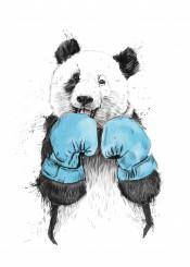 panda animal box sport grunge