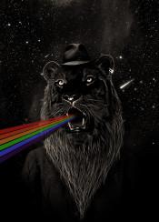 animals nature space stars rainbow graphics lion beard