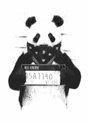 panda animal black and white mugshot bandit gangster wanted humor funny grunge