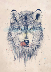 wolf animal portrait hungry grunge blue