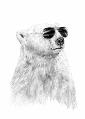 bear black white portrait polar sunglasses summer humor funny