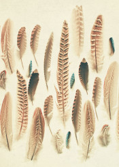 photography feathers nature bird cyan brown cream tribal collection pretty beautiful