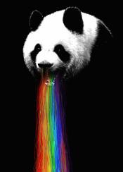 panda vomit rainbow animals funny humor illustration nature