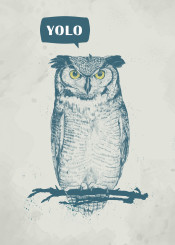 owl animal humor funny yolo drawing portrait blue