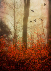 fall autumn foliage blur nature trees forest haze leaves birds mystic