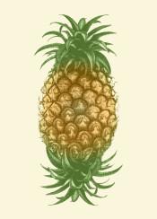 pineapple fruit color fresh