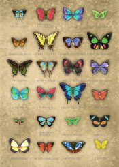 butterflies collage light cardboard cream neon colors vintage set victorian antique surreal rainbow
