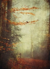 forest fall autumn misty haze atmosphere solitude texture leaves bird nature trees