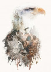 surreal animals eagle bald eagle america nature skull painting wolf owl deer forest double exposure
