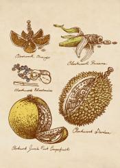 clockwork fruit kubrick vintage steampunk victorian drawing durian banana gears