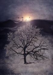 illustration nature birds sunset