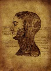 ANATOMIC VINTAGE by Renee ar | metal posters - Displate