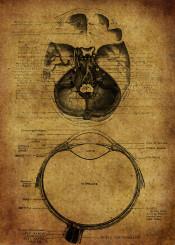 anatomic anatomy eyes vintage grunge ilustration