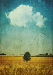 lonetree tree cloud summer field vintage textures painterly atmosphere golden blue
