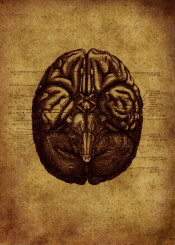 anatomic anatomy head vintage grunge red brune ilustration cervello