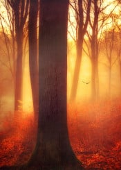 light morning backlight tree romantic misty nature glow trees leaves fall atmosphere mood beauty