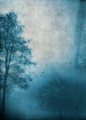 fog trees silhouettes painterly blue mood atmosphere textures birds monochrome