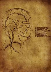 anatomic anatomy head vintage grunge red brune ilustration skull