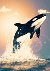 orca sunset killerwhale whale sea ocean animal sun water splashes freedom nature creature