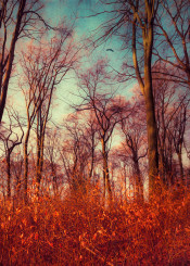 forest trees landscape leaves dreamy painterly morning colors orange red romantic nature