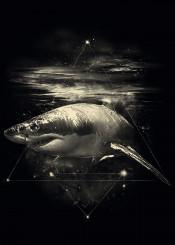 shark in space universe galaxy animal underwater sea creature geometric lines triangle