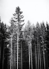 tree woods black white sky mountain