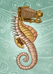 seahorse camera underwater pop surrealism collage vintage