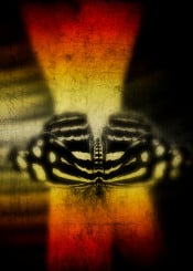 butterfly red yellow black insect closeup textures blur exotic