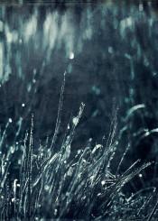 grass monochrome detail waterdrops dof bokeh abstraction dew texture macro