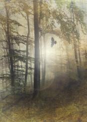 backlight autumn fall bird texture mystery mood atmosphere leaves forest hazy mist vintage
