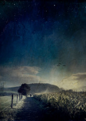 light rural cornfield blue stars tree painterly stars surreal shadows light person fence sky clouds