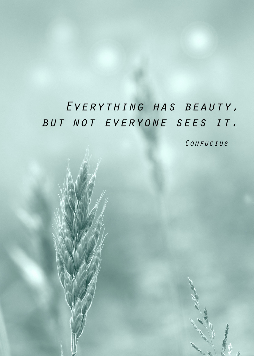 Immagine di Everything has beauty...