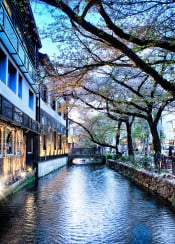 kyoto japan cherry blossom canal hdr photo